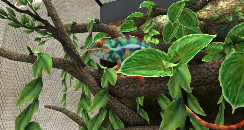 ⁣⁣Rainbow chameleon chillin' :rainbow: :frog: -- My blog: ⁣https://sashasecondlife.blogspot.com